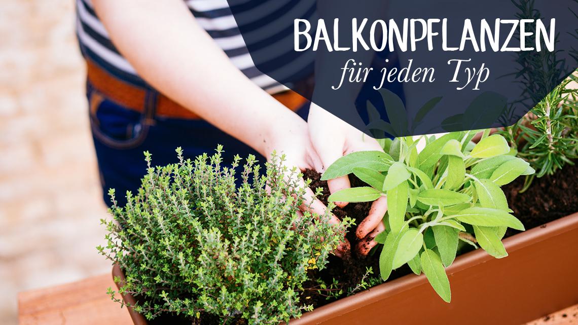 Wohlfühlweb: Balkonpflanzen Für Jeden Typ